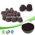 Mulberry extrato antocianinas/mulberry antocianinas/antocianinas mulberry extrato de pó