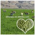 Neue ernte Luzerne pellet/feed Luzerne für verkauf