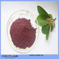 /gmp iso/halal recetas con bayas de saúco suplemento nutricional