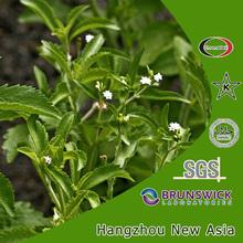 100 pure stevia