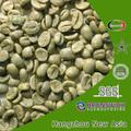 grano de café verde en polvo extracto