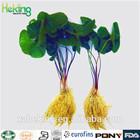Natural High Quality Radix et Rhizoma Asari/Herb of Seoul Wildginger / Herb of Siebold Wildginger