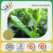 free sample GMP manufacturer organic natural green tea extract 98% polyphenol