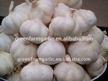 white and red fresh garlic