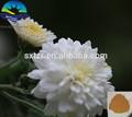 Mutterkraut extrakt& lateinische Name: tanacetum parthenium