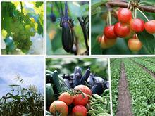 Wholesale Bulk Phosphoric Acid 85% Fertilizer