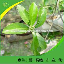 100% Natural Radix Morindae Officinalis Extract 5:1;10:1
