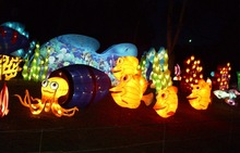 Three!! Lantern sea animal/fish lantern for decoration theme park