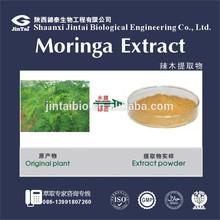 herb medicine 10:1 moringa extract powder