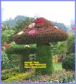 natural topiaria de árvores artesanato para decoração de jardim