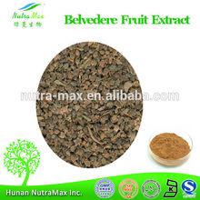 100% Natural Broom Cypress Fruit Extract,Broom Cypress Fruit Extract Powder,Broom Cypress Fruit Extract 10:1