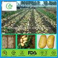 Le plus populaire de pommes de terre importation et l'exportation favorisée par importateurs - le best - Seller en chine