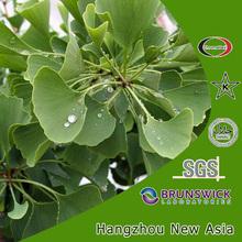 ginkgo biloba leaves p.e