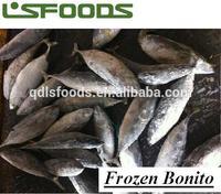 Frozen Bonito all size