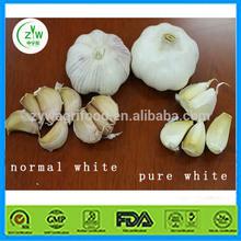 narmal white garlic Pure white garlic hot sale supplier in China