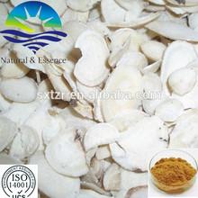 Herbal Medicine ! wholesale angelica root extract,angelica root extract powder,angelica root p.e. with wholesale price