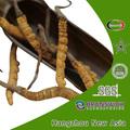 cordyceps sinensis extracto polisacárido 30