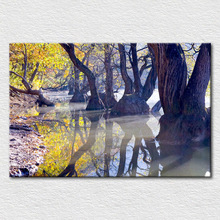 Cotton canvas printed painting from Fantasy Nuture photo of Ancient trees in the river, fine room decor moder oil painting
