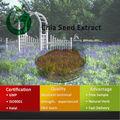 Chia extracto de semilla de Chia / en polvo de semillas / semillas de Chia precio