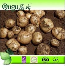 2014 New Crop Fresh Potato The Netherlands potatoes