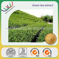 China factory making natural antioxidant 100% pure polyphenols decaffeinated green tea extract