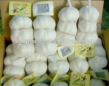 new crop garlic