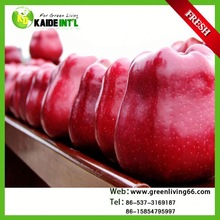 2014 Famous Fresh Apple Fruit In China