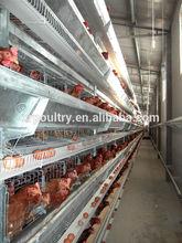 gaiolas em bateria galinhas poedeiras