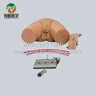 BIX-H1D Medical Electronic Urethral Catheterization and Enema Model