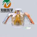 Bix-h30 superior- brazo de inyección intramuscular y simulador de comparación( con alarmante sistema)