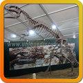 lebensgroße dinosaurier fossilen Museum dinosaurierskelett Probe