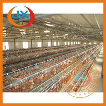 layer egg chick cage/poultry farm house design