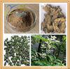 Natural black cohosh extract black cohosh saponin black cohosh powder