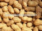 good taste big size roasted peanuts in shell