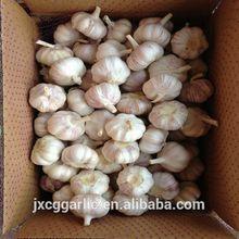 natural garlic/ajo/alho
