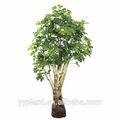 China 160 cmaltura dinero planta de árbol-0450