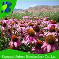 alta germinação de sementes de echinacea