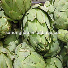 Hot Selling organic artichoke
