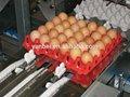 30 huevos huevo de plástico de embalaje bandeja