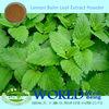100% Natural Lemon Balm Extract/Lemon Balm Leaf Extract/Lemon Balm Extract Powder