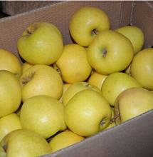 fresh green apple (Mutsu)