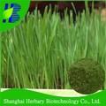 Gerstengrassaft extrakt pulver Gerstengrassaft