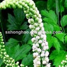 Natural Plant Extract black cohosh p.e