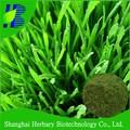 Natürlichen extrakt-pulver Weizengras-Saft