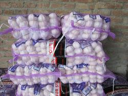China garlic/Garlic origin/Chinese garlic price
