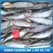 Best Canned Frozen Sardine Fish