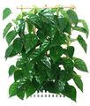 Artificial ginseng raíz del árbol flor de cerezo árbol de frutas artificiales bonsai plantas y flores 2014 caliente venta