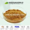 high quality sea buckthorn extract / holy thorn extract