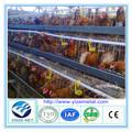 flat pack de pollo coop