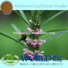 Hot Sell Chinese Motherwort Leaf Powder/Motherwort Leaf Extract Powder/Motherwort Leaf Extract Powder Women Health